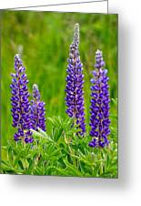 Wild Lupine Greeting Card by Karon Melillo DeVega