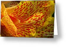 Wild Petals Greeting Card by Jeannie Burleson
