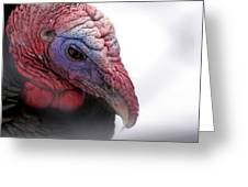 Wild Turkey Head Portrait Greeting Card by Laurie With