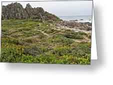 Wildflowers At China Rock - Pebble Beach - California Greeting Card by Brendan Reals