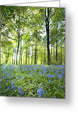 Wildflowers In A Forest Of Trees Greeting Card by John Short