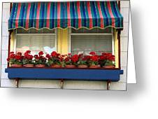 Window Box Geraniums Greeting Card by Colleen Kammerer