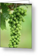 Wine Before Picture Greeting Card by Lisa Knechtel