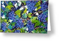 Wine On The Vine Greeting Card by Richard T Pranke