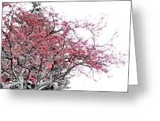 Winter Berries Greeting Card by Scott Hovind