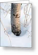 Winter Birch Greeting Card by Bill Morgenstern