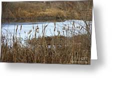 Winter Cattails Greeting Card by Carol Groenen