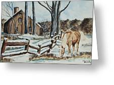 Winter Grazing  Greeting Card by Charlotte Blanchard