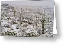 Winter In The Desert Greeting Card by Sandra Bronstein