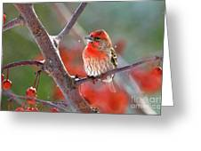 Winter Red Greeting Card by Betty LaRue