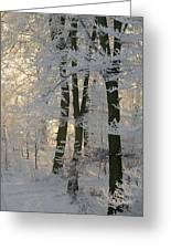 Winter Sun Greeting Card by Odd Jeppesen