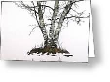 Winters Birch Greeting Card by Carolyn Doe