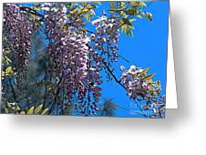 Wisteria Greeting Card by Chere Lei