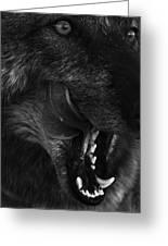 Wolf Close Up Greeting Card by Dawn Kish