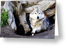 Wolf Den 1 Greeting Card by Marty Koch