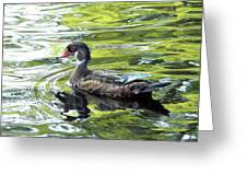 Wood Duck Greeting Card by Al Powell Photography USA