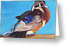 Wood Duck Greeting Card by Rodney Campbell