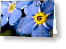 Wood Forget Me Not Blue Two Greeting Card by Ryan Kelly