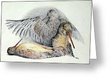 Woodcock Greeting Card by Betsy Gray