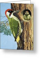 Woodpecker Greeting Card by RB Davis