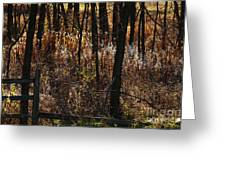 Woods - 2 Greeting Card by Linda Knorr Shafer