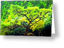 Woods Greeting Card by Roberto Alamino