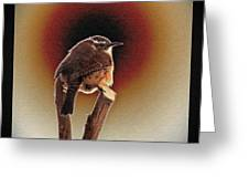 Wren at Sundown Greeting Card by Sue Melvin