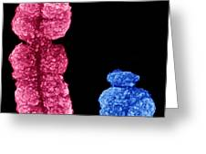 X And Y Chromosomes Greeting Card by