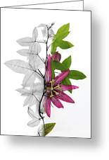 X-ray Of A Passion Flower Greeting Card by Ted Kinsman