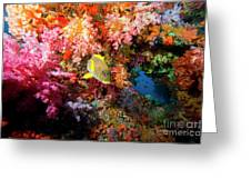 Yellow Banded Sweetlip Fish And Coral Greeting Card by Beverly Factor