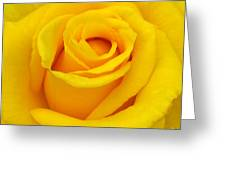 Yellow Beauty Greeting Card by Mg Rhoades