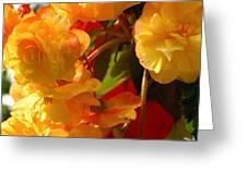 Yellow Begonia Flowers.  Victoria Greeting Card by Darlyne A. Murawski