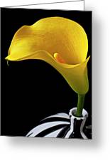 Yellow Calla Lily In Black And White Vase Greeting Card by Garry Gay
