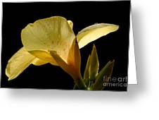 Yellow Canna Greeting Card by Jeannie Burleson