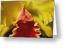 Yellow Cattleya Orchid Greeting Card by Greg Vaughn - Printscapes