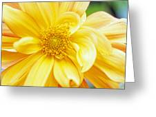 Yellow Dahlia Greeting Card by Kathy Yates