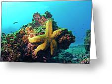 Yellow Sea Star On A Rock Underwater View Greeting Card by Sami Sarkis