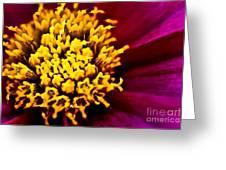 Yellow Stars Burst Greeting Card by Ryan Kelly