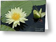 Yellow Water Lily With Bud Nymphaea Greeting Card by Heiko Koehrer-Wagner