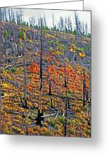 Yellowstone - Forest Burn 1 Greeting Card by Steve Ohlsen