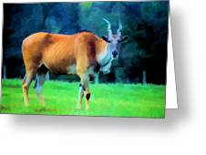 Young Eland Bull Greeting Card by Jan Amiss Photography