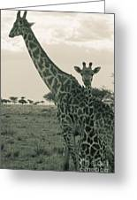 Young Giraffe With Mom In Sepia Greeting Card by Darcy Michaelchuk