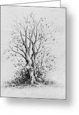 Young Tree Greeting Card by Rachel Christine Nowicki