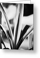 Yucca Greeting Card by Gerlinde Keating - Keating Associates Inc