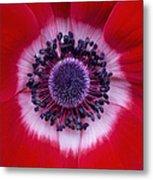 Anemone Coronaria Harmony Scarlet Flower Metal Print by Tim Gainey