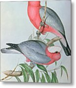 Birds Of Asia Metal Print by John Gould
