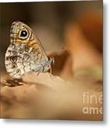 Lattice Brown Kirinia Roxelana Metal Print by Alon Meir