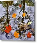 Autumn Metal Print by Daniel Janda