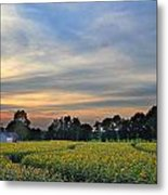 Buttonwood Farm Metal Print by Andrea Galiffi