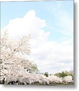 Cherry Blossoms - Washington Dc - 01131 Metal Print by DC Photographer